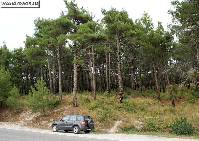Машина у леса