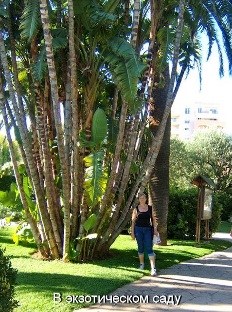 В экзотическом саду Монако