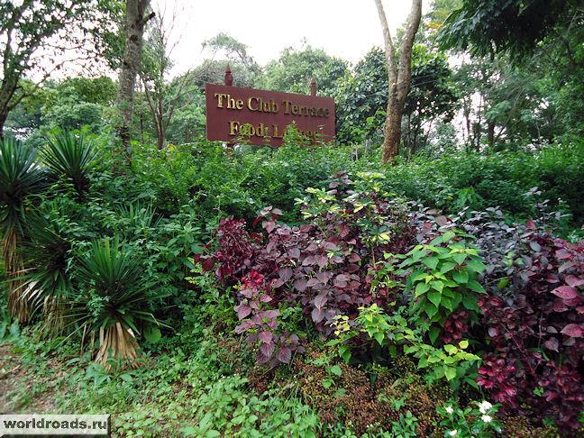 Одна из террас ботанического сада Мьянмы