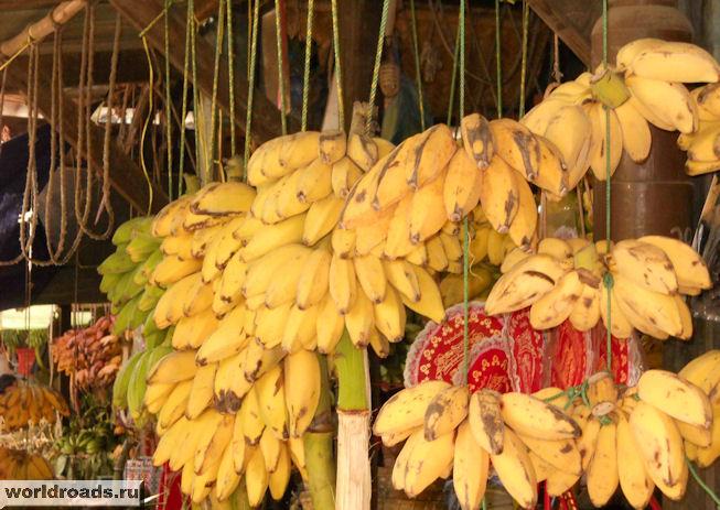 Бананы толстые