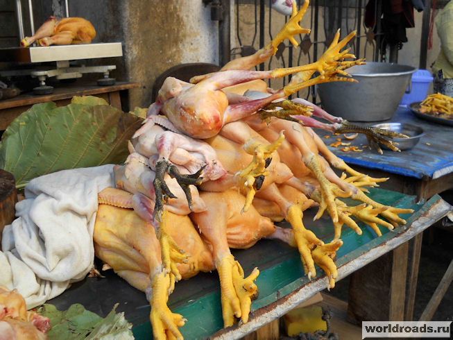 Мьянманские куры