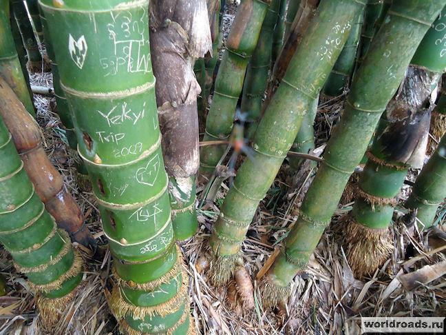 расписной бамбук