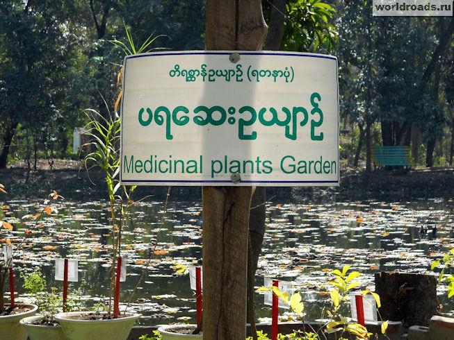 Медицинская плантация