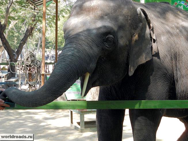 Слона можно потрогать