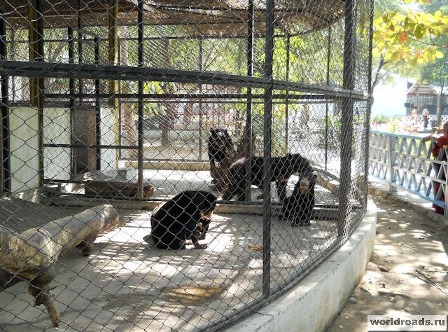 Солнечные медведи
