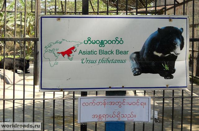 Табличка гималайского медведя