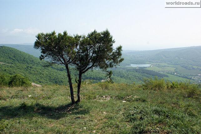Сосна и голубое озеро
