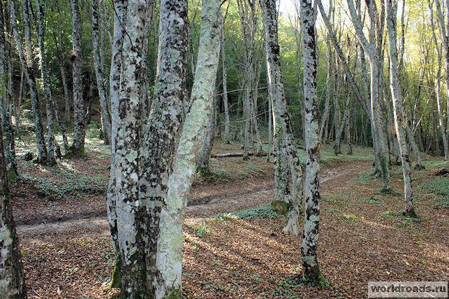 Лес в Возрождении