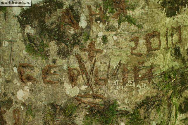 Надпись на дереве