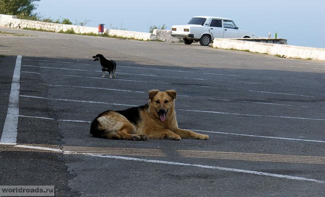 Собака на Семи ветрах