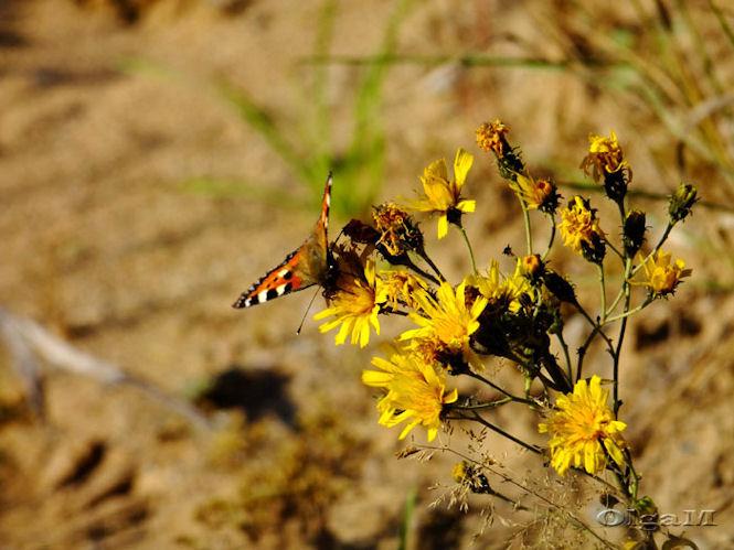 3. Цветы и бабочка