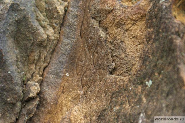 Отпечаток на камне реликтового растения