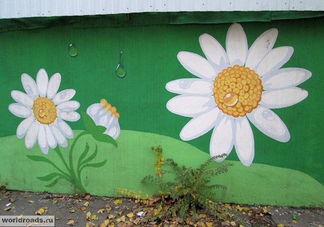 Ромашки граффити