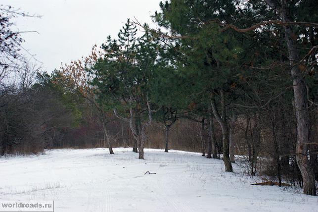 Ботанический сад Ростова-на-Дону зимой