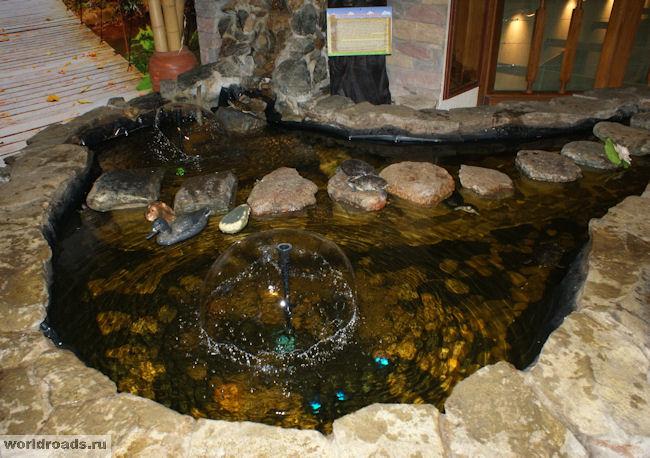 Бассейн с красноухими черепахами