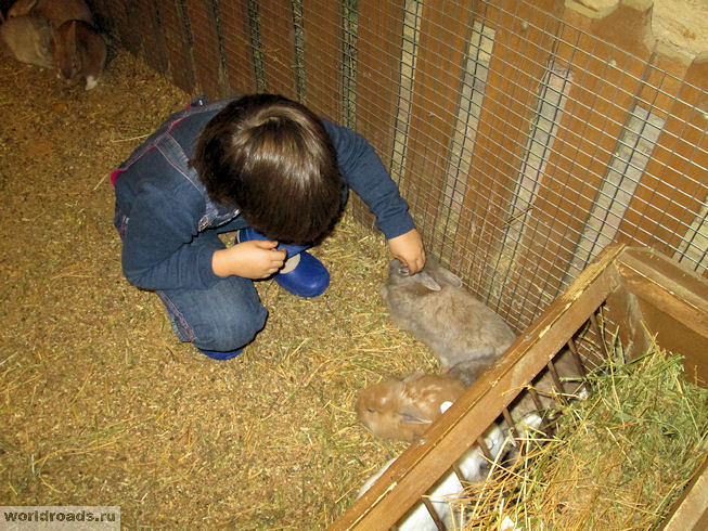 В загоне с кроликами