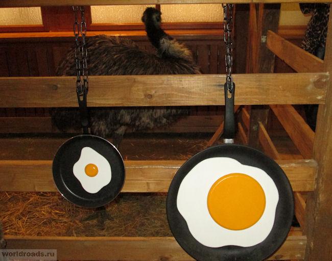 Яичница из яйца страуса